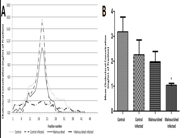 Cholesterol distribution on circulating lipoproteins in animal of groups CT, CTIn, MN and MNIn. A) Cholesterol profile found in lipoprotein fractions analyzed. B) Mean values of the sum of the cholesterol concentration found in the different experimental groups. It can be observed that malnutrition associated with giardiasis (MNIn group) resulted in lower levels of cholesterol in lipoprotein fractions in relation to animals of group CT. *p < 0.05 vs CT. Date shown is the means ± SEM.
