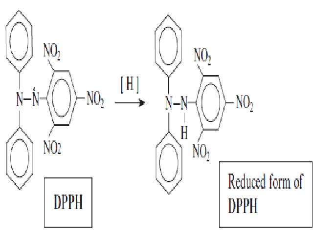 Reduction of 1,1, Diphenyl -2-Picryl hydrazyl – (DPPH) free radical