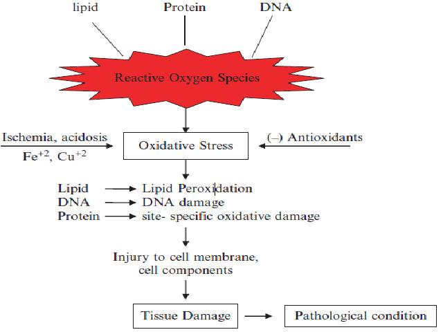 Pathogenesis of tissue damage
