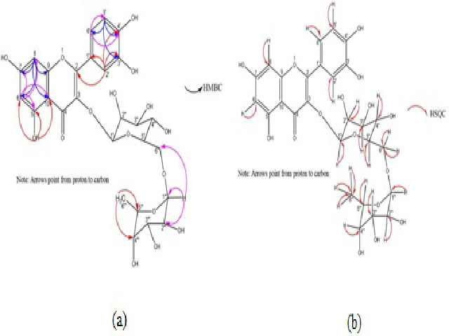 The key HMBC (a) and HSQC (b) correlations of isolated Rutin