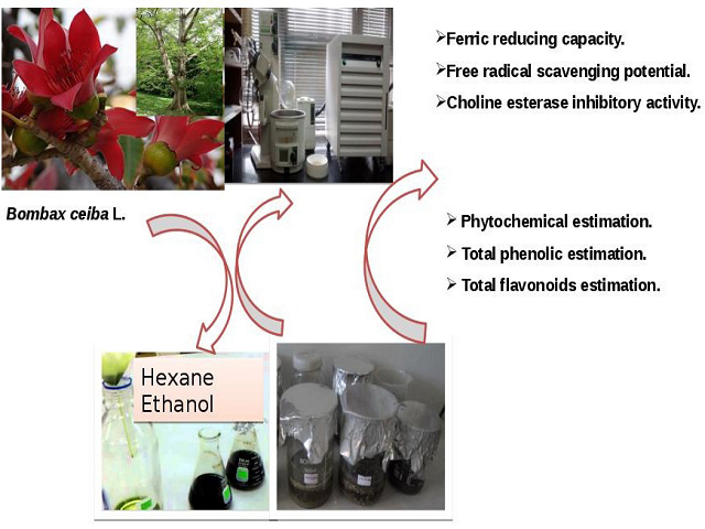 Antioxidant and Choline Esterase Inhibitory Activity of Phenolic Rich Extracts from Bombax ceiba L. Flowers