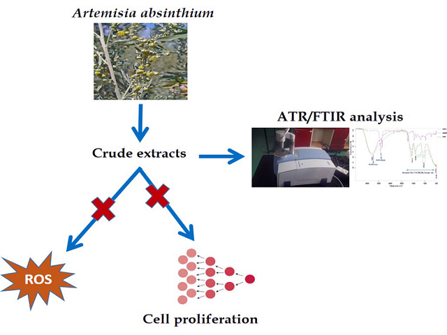 An in vitro Study of the Antioxidant and Antiproliferative Properties of Artemisia absinthium- A Potent Medicinal Plant